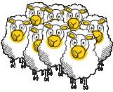 moutons - Cab'Qual